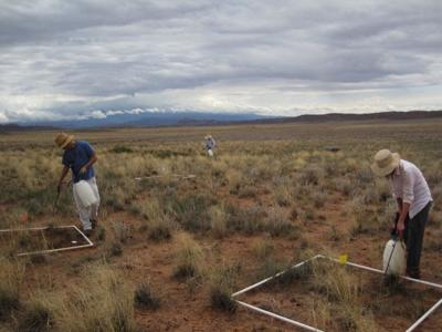 Arches National Park research plots