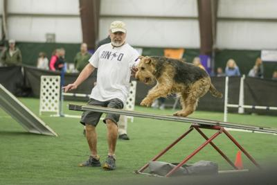 Rock Star Agility Network's Dog Agility Competition
