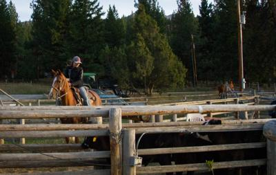 UM's new champion cowgirl elevates rodeo team
