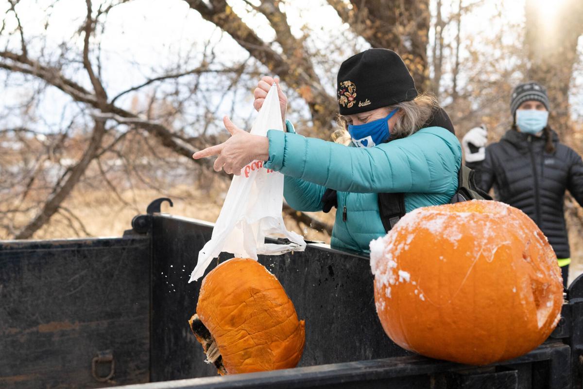 Pumpkin Re-harvest 01