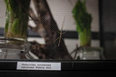 Insectarium bugs get a temporary home in UM Bio Division