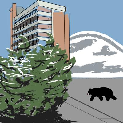 Bear on Campus Graphic