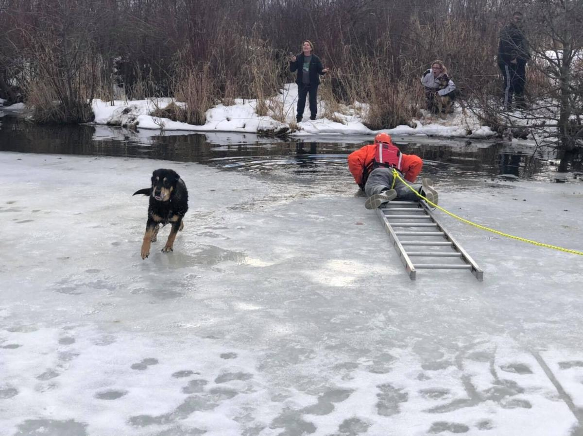 Dog rescued after getting stuck in cold water in Frenchtown