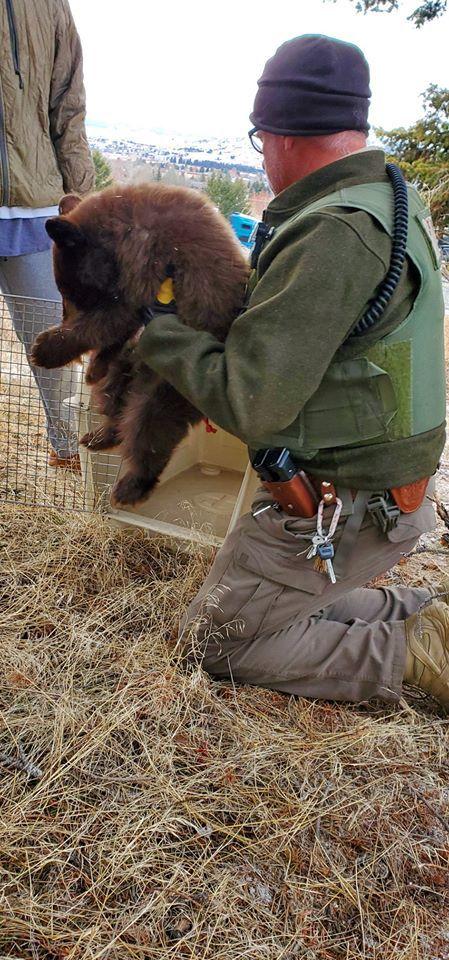 Bear cub rescue