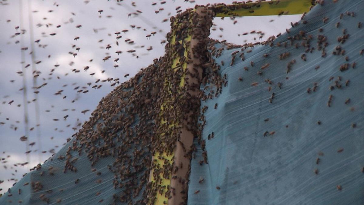 bee semi accident