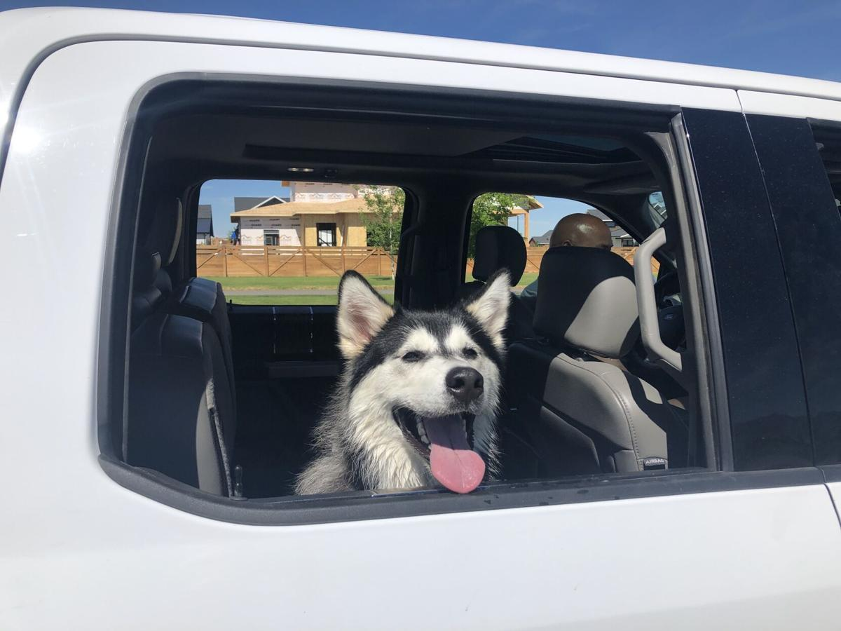 Heat wave reminder: Hot cars not safe for dogs