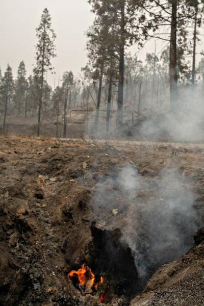 Burning stump in Creek Fire