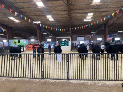 Cascade County 4-H Livestock Show and Sale