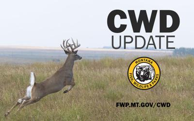 Montana Fish, Wildlife & Parks look to crack down on Chronic Wasting Disease