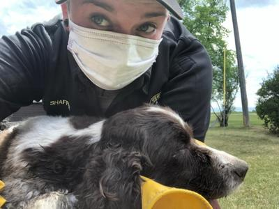 Gallatin County animal control officer rescues 15-year-old dog from wild animal den