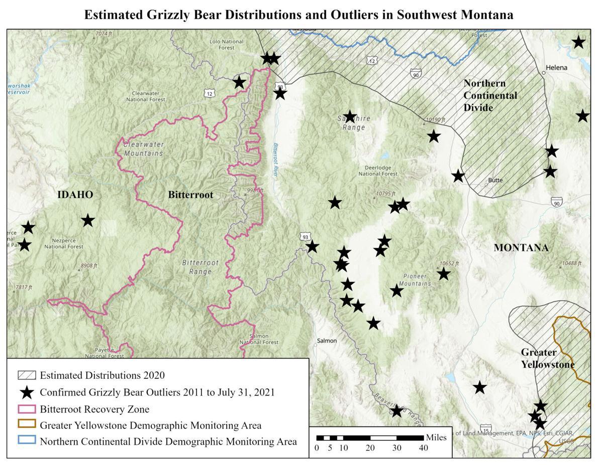 FWP warns of recent bear activity in Upper Clark Fork, Bitterroot valleys