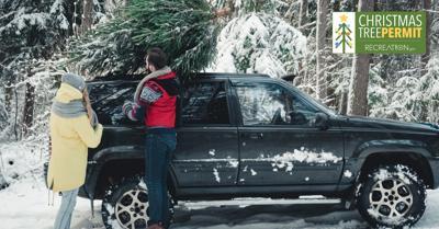 Christmas tree cutting permits