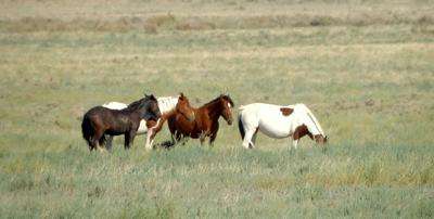 Horses - WikiMedia