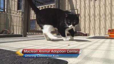 Maclean Animal Adoption Center Offering Educational Courses