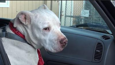 Dog with cancer checks off last bucket list item