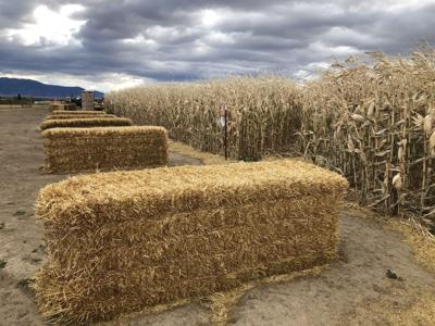 Gallatin Valley's fall maze attractions make difficult decisions amid pandemic