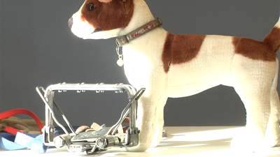 Stuffed Toy Dog and Hunting Trap.