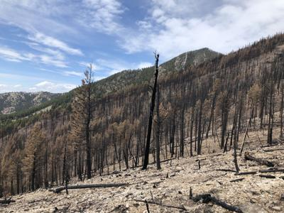 Bozeman forest health and timber project begins this week in north Bridgers