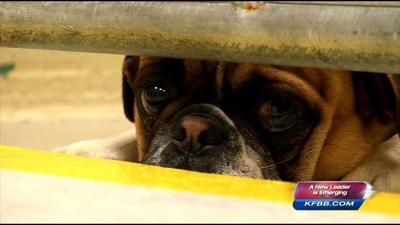 Maclean Animal Adoption Center pays off debt after 13 months