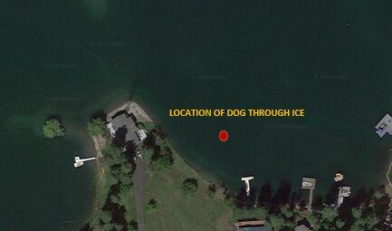 Dog rescued after falling through ice on lake near Bigfork