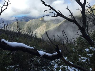 Snow on Junipero Serra