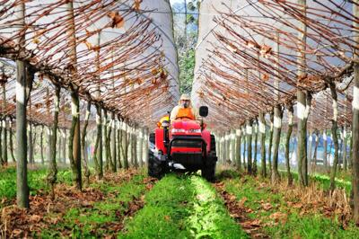 Tractor in a greenhouse