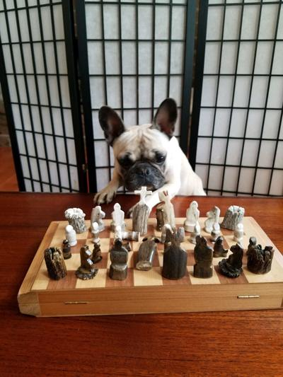 Antler Chest Set and a Frenchie