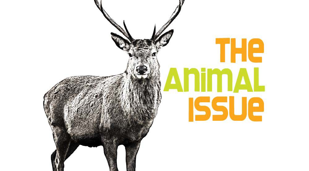 The Animal Issue