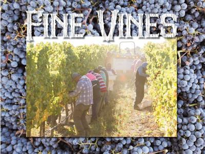 A lot of things can – and do – go wrong during the wine grape growing season, but not this year.
