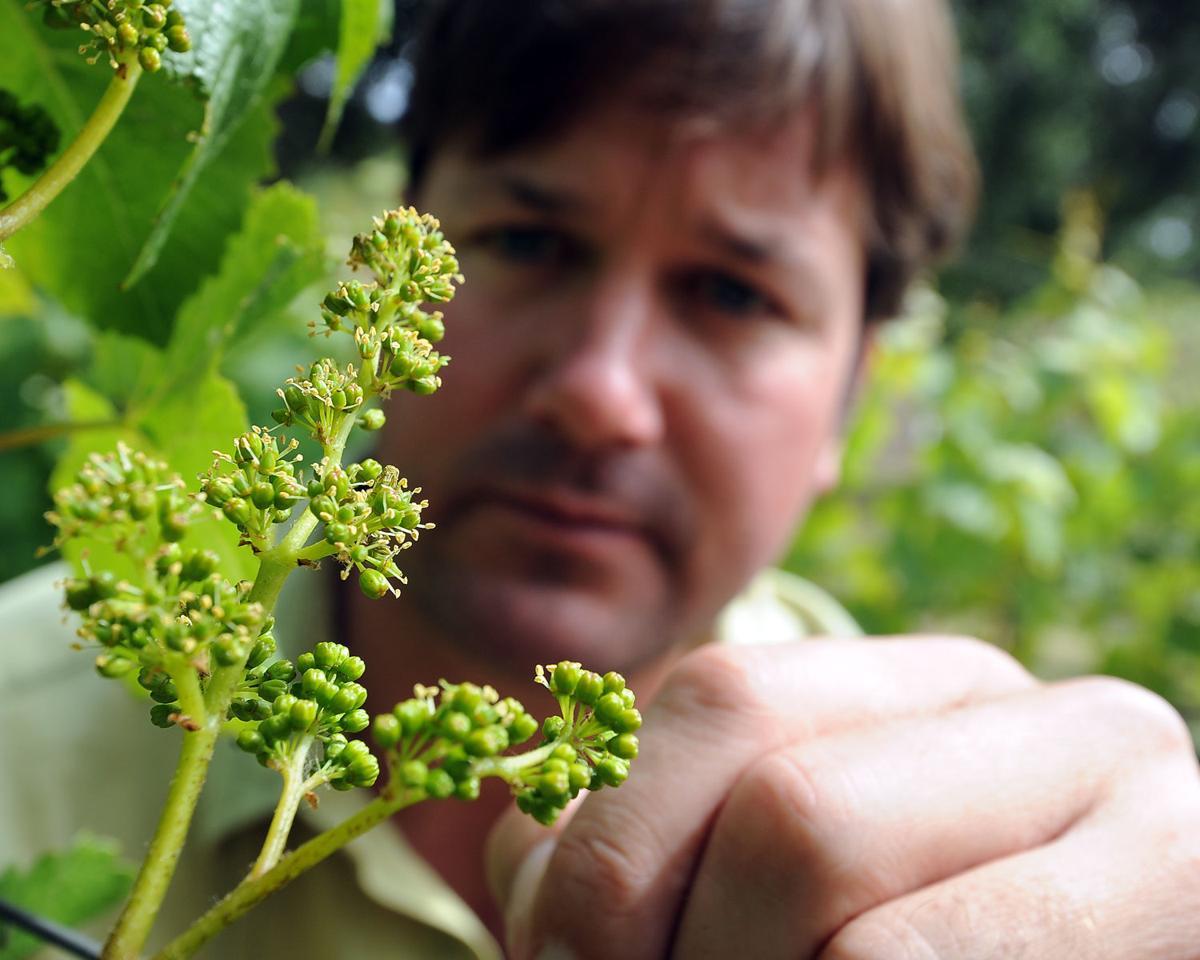 PF in the vineyard