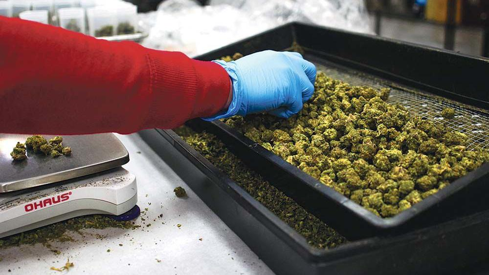 The cannabis industry faces a reckoning as formerly hot capital markets go cold and bills go unpaid.