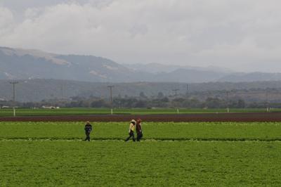 ag field