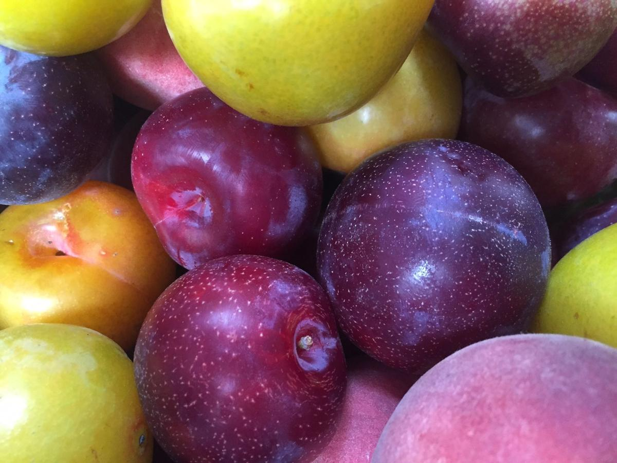 stone fruit at farmers market