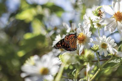 Monarch advocates flock to first summit with an eye toward saving the beleaguered butterfly.