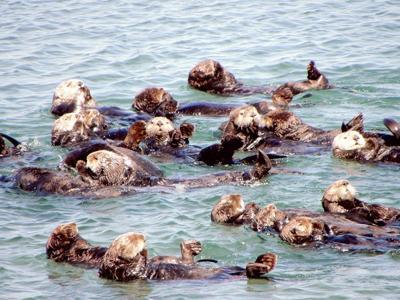 Otter Eden