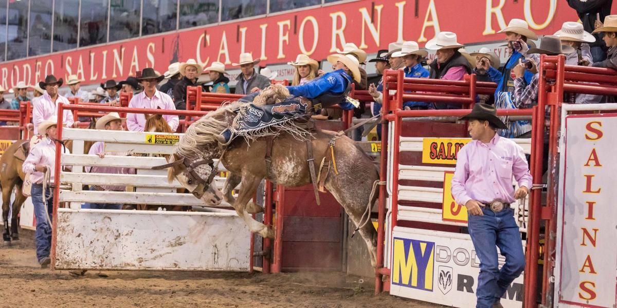 Rodeo Saddle Bronc Rider