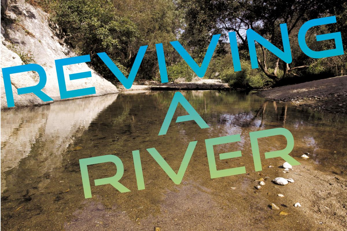 Reviving a River