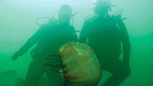 Monterey scuba divers help collect and map underwater trash.