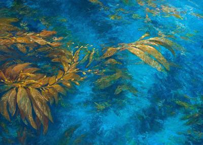 Aqua Cove