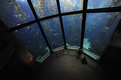 Monterey Bay Aquarium (copy)