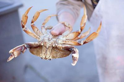 Crabby Season