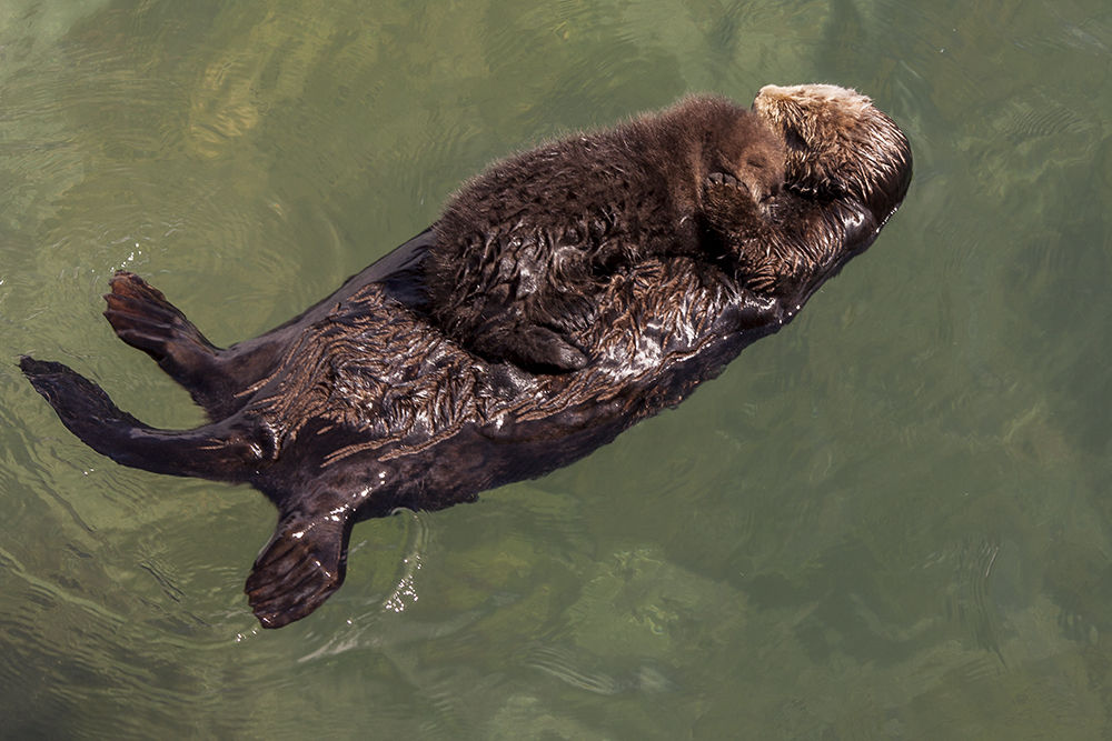 OtterNC001.jpg