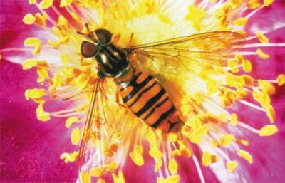 PG Museum hosts an art bee-in.