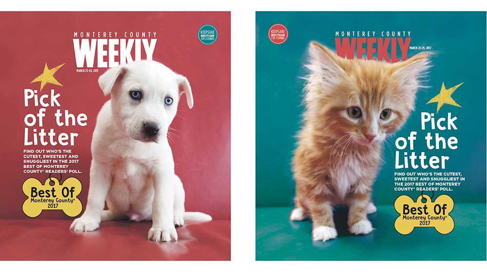 Puppy-Cat Love