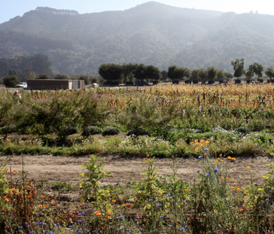 Taylor Farms become largest organic salads producer with acquisition of Earthbound Farm.