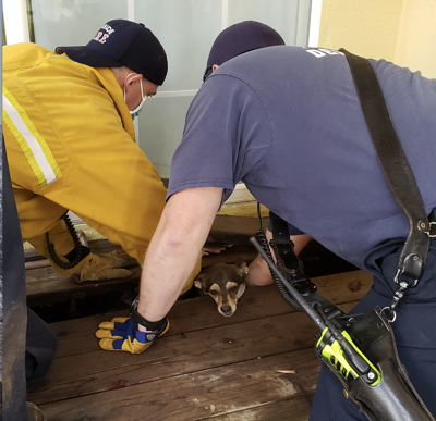 Seaside firefighters rescue Lulu, photographed by Susanna Margelin