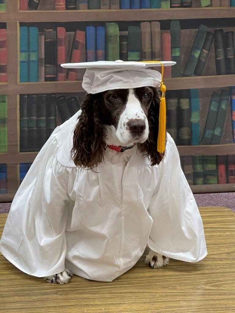 Popcorn is Ready for Graduation - 2