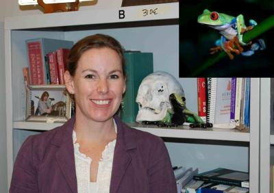 Researching AUM:  Chelsea Ward thinks amphibians 'toadily' rock