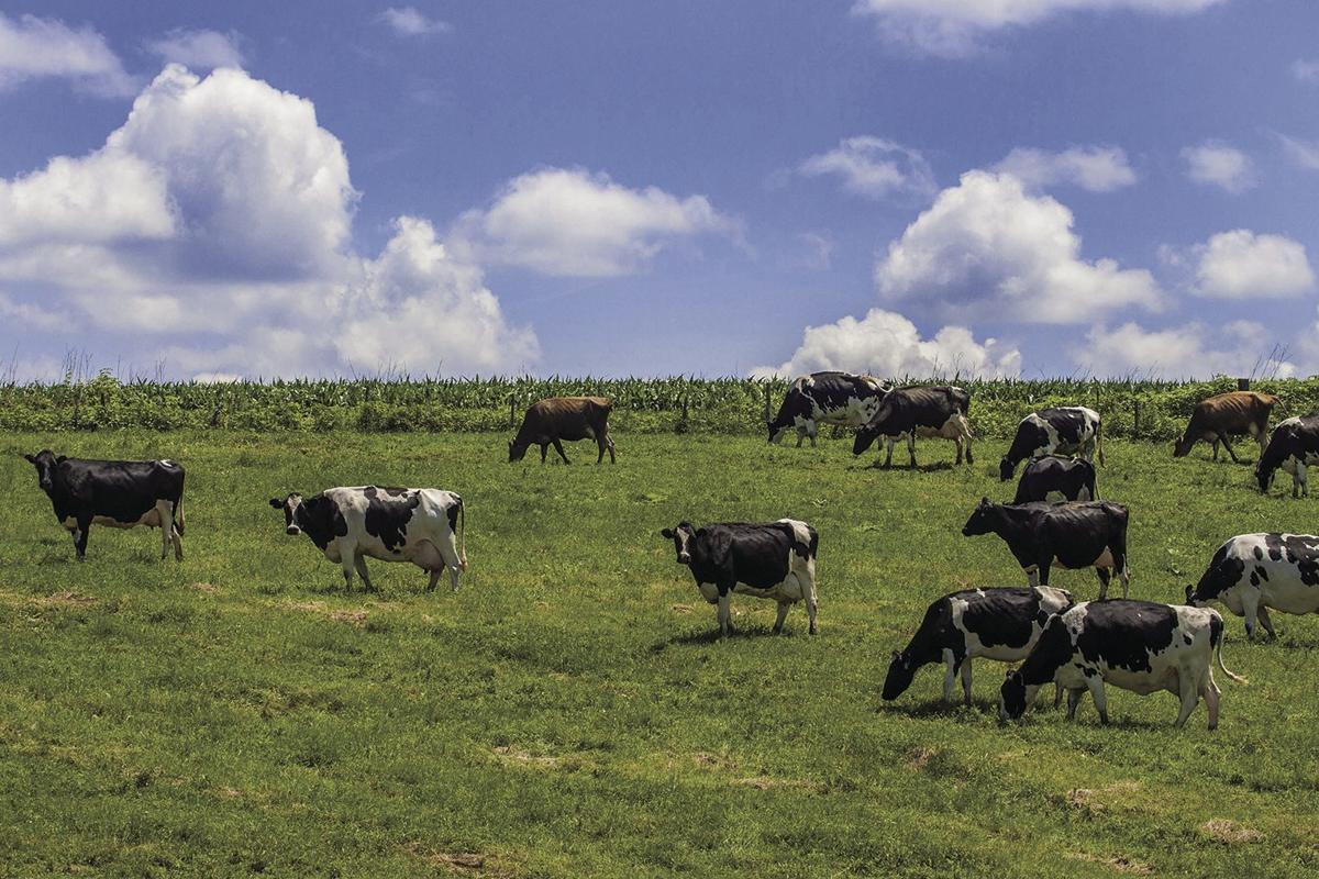 cows generic