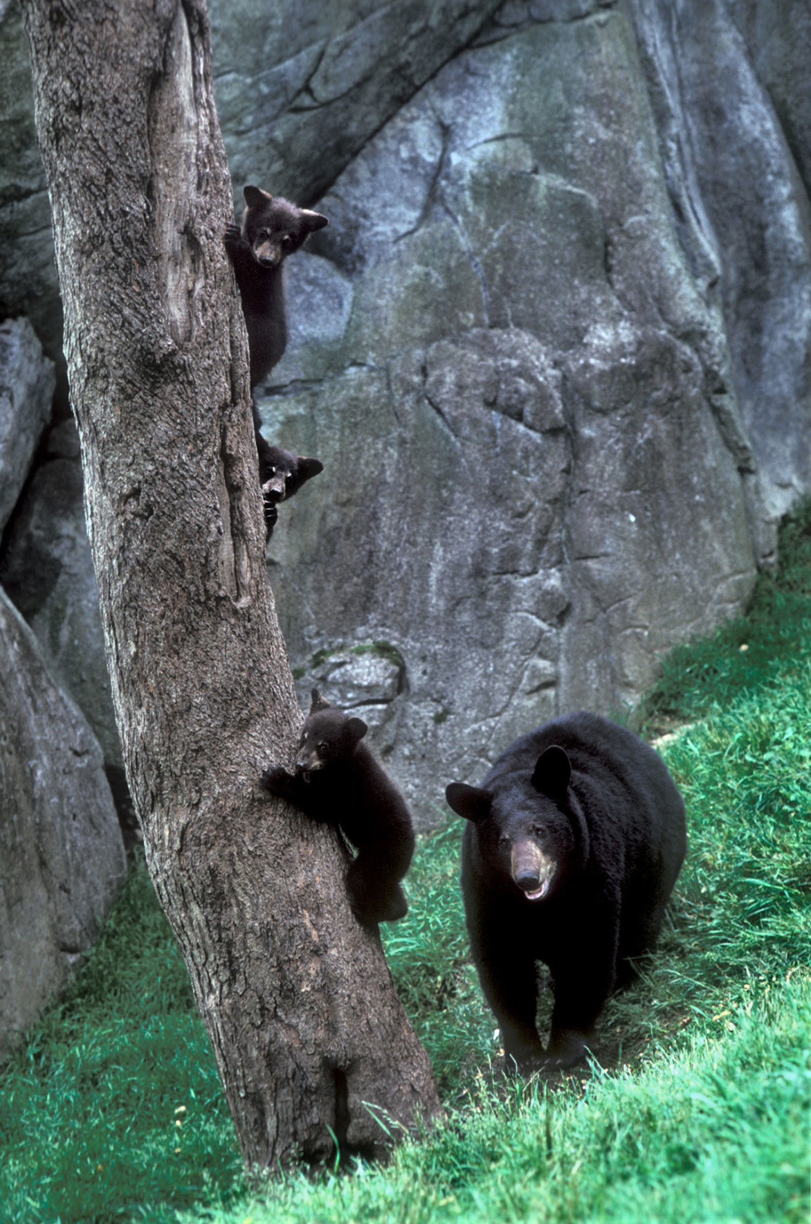 6-28 Gerry and cubs.jpg